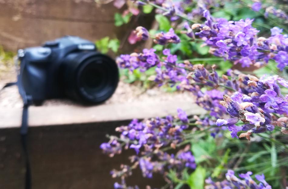 Eine Kamera liegt auf einer Holzstufe hinter einem blühenden Lavendel.