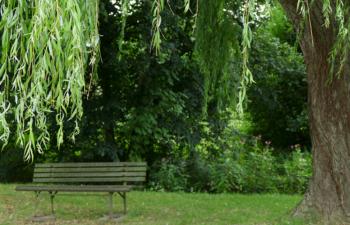 Eine Bank unter einer Weide im Park.